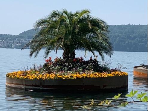 Landesgartenschau Insel mit Palme